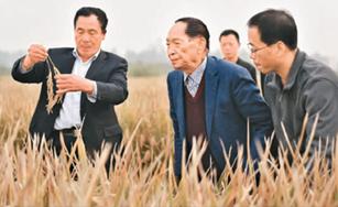 中国水稻,不断给世界带来惊喜
